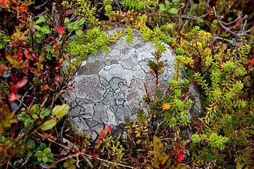 Steen - Zweeds Lapland von