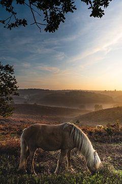 Le cheval et sa bruyère sur Albert Lamme