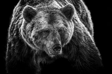Close-up van bruine beer in zwart wit van Caroline van der Vecht
