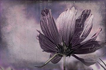 Kosmee mit french ephemera von Annette Hanl