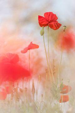 Lovely Poppies van Bob Daalder
