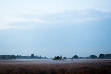 """Le parc national paysager """"Groote Peel"""" avec le brouillard sur Ger Beekes"""