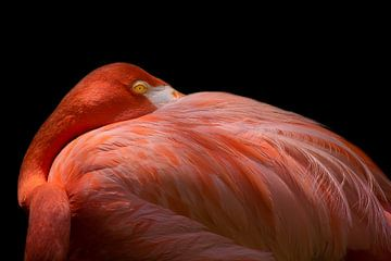 Melancholy Flamingo, Natalia Rublina von 1x