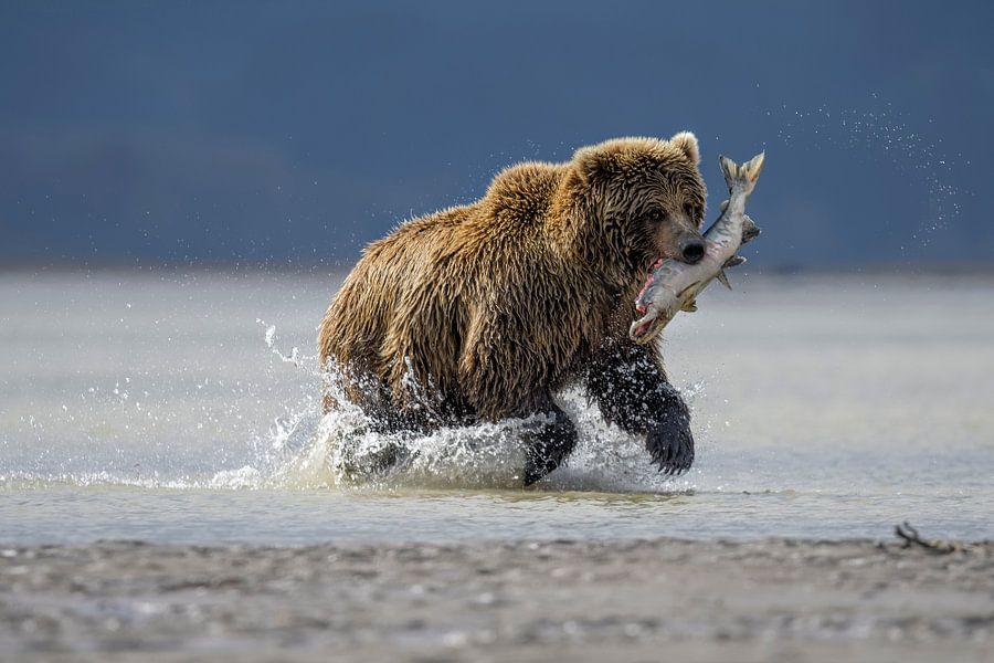 Hunting Bear van Riccardo Marchegiani