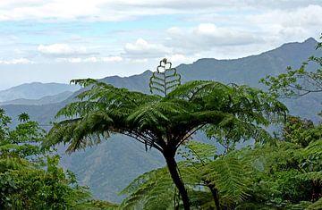 Farnbaum in der Sierra Maestra, Cuba von Jutta Klassen
