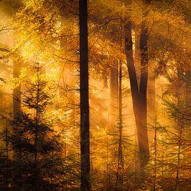 Drenthe in de Herfst - Herfstfoto van de bossen bij Gasteren in Drenthe met prachtig licht van Bas Meelker