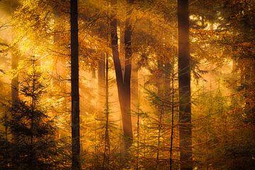 Drenthe im Herbst - Herbstfoto der Wälder bei Gasteren in Drenthe mit schönem Licht von Bas Meelker