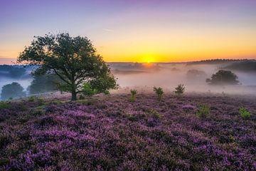 Posbank Sonnenaufgang mit Nebel von Albert Dros