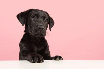 Porträt eines süßen schwarzen Labrador-Welpen von Elles Rijsdijk