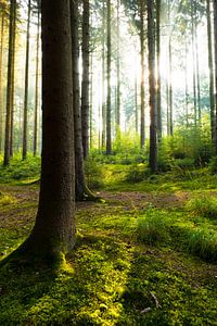 Beautiful forest van