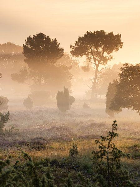 Nebliger Sonnenaufgang von Art Wittingen