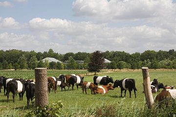 Lakenvelders bij Kasteel de Vanenburg Putten van Wilbert Van Veldhuizen