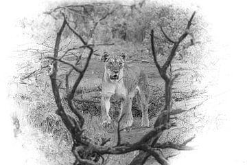 Een bijzondere compositie van een leeuwin in zwart-wit. van Gunter Nuyts