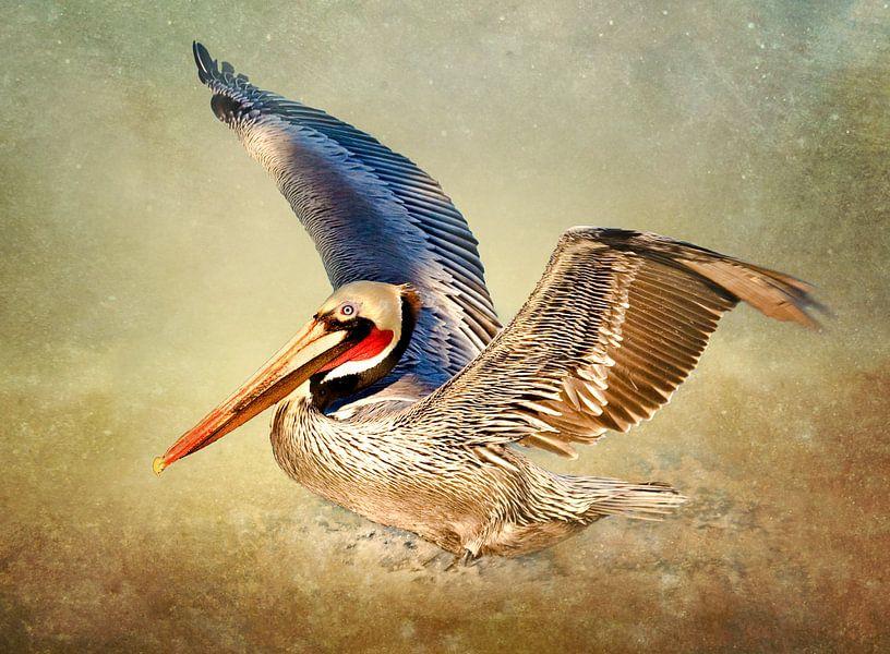 Vliegende Pelikaan - Vogels Muurdecoratie van Diana van Tankeren