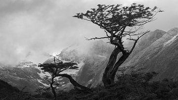 Einsame Bäume auf Feuerland van