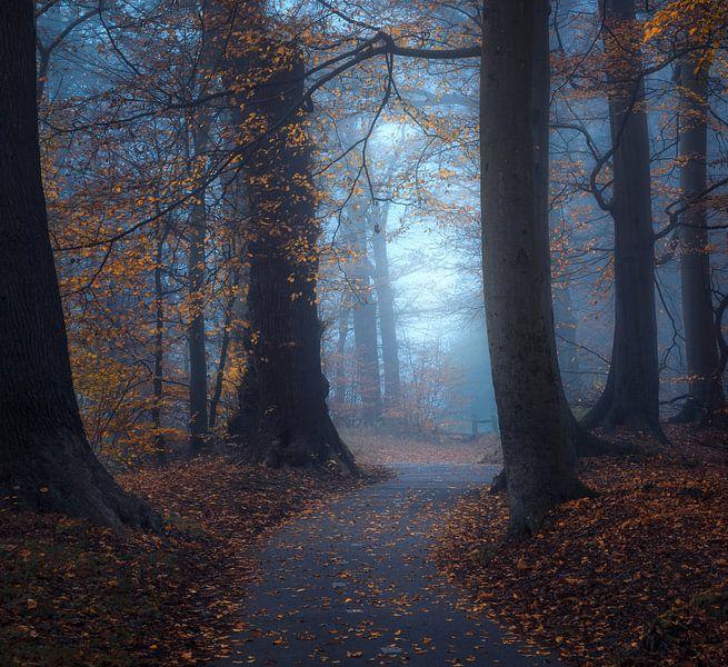 Hope Leaves von Daniel Laan