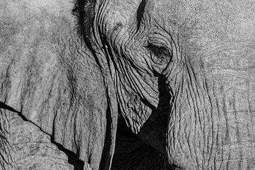 Zwart-wit close-up foto van woestijnolifant / olifant - Twyfelfontein, Namibië sur Martijn Smeets