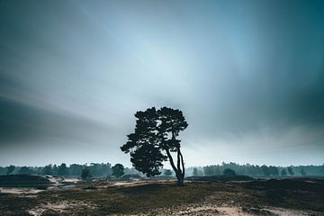 De eenzame boom, Zeist Heidestein Utrechtse heuvelrug! van Peter Haastrecht, van