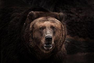 ein abgedunkeltes Bild, ein strenge braune, leicht verwirrende Bestie schaut mit kleinen Augen aus d von Michael Semenov