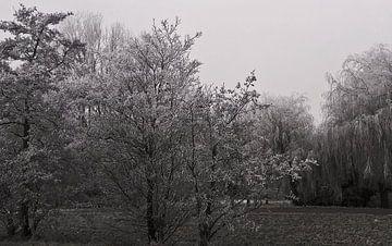 Winterbomen van Rinke Velds