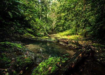 Jungle Paradise van Vivian Paola