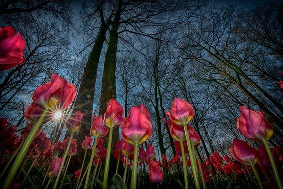 tulpen april 2019