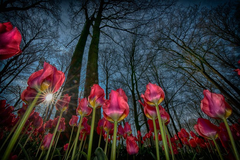 tulpen april 2019 van Egon Zitter