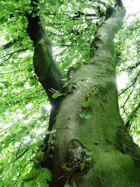 Tree Magic 13