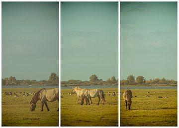 lauwersmeer triptychon 18 von anne droogsma