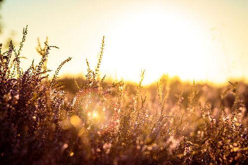 Sunrise von Geert Huberts