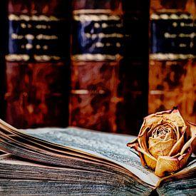 Rose im Buch von Andreas Müller