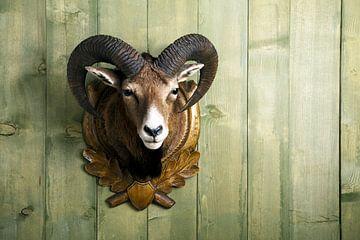 Mouflon van Jürgen Wiesler