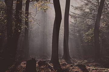 Tanzende Bäume im Sonnenlicht von Dirk-Jan Steehouwer