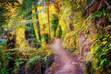 Wandelpad door het bos, Nieuw Zeeland van Rietje Bulthuis