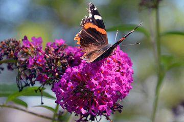 Vlinder op een bloem van Jaimy Buunk