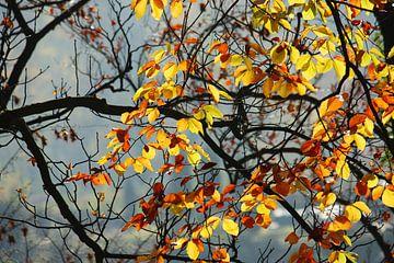 golden fall IX van Meleah Fotografie