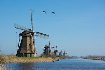 Kinderdijk Windmühlen mit Gänsen von Kok and Kok