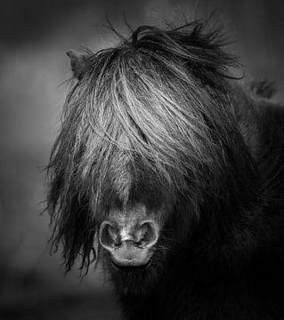 Pony zwart wit portret van Jeroen Mikkers