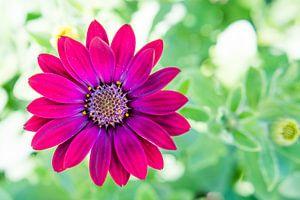 Kleurrijke bloem met bokeh achtergrond van