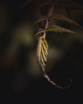 Elegant leaf van Sandra Hazes