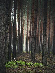 Der Schatz im Wald