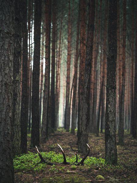 Der Schatz im Wald von Jakub Wencek