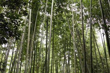 Arashiyama bamboo forest in Japan sur Marcel Alsemgeest