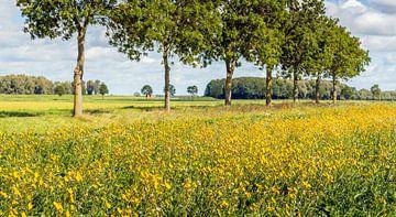 Bloeiende rand langs een Nederlandse akker van Ruud Morijn