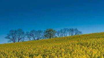 Boven het veld van Henk Goossens