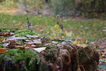 Herbst im Haagsche bos von Jan Radstake