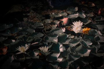 Die Wasserblume von Faucon Alexis