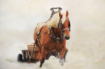 Paard met wagen in het water van