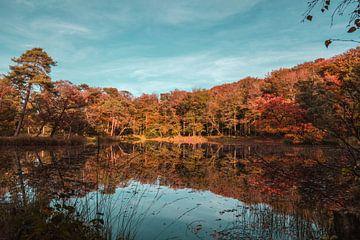 Herfstig landschap von Nynke Nicolai