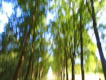 bewegend bos 2 van Peter Heins